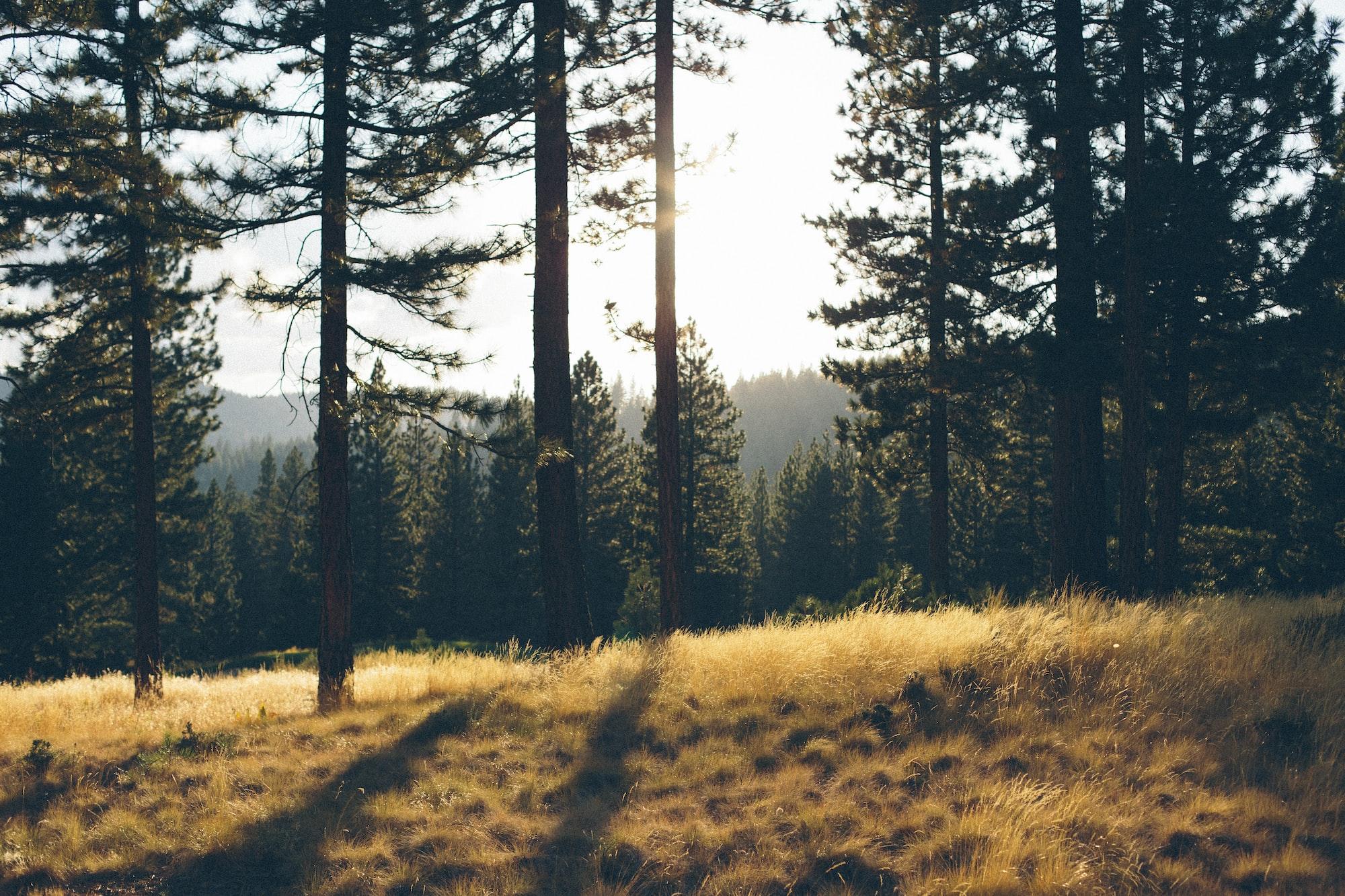 Nhớ rừng
