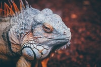 selective focus photo of gray and brown reptile