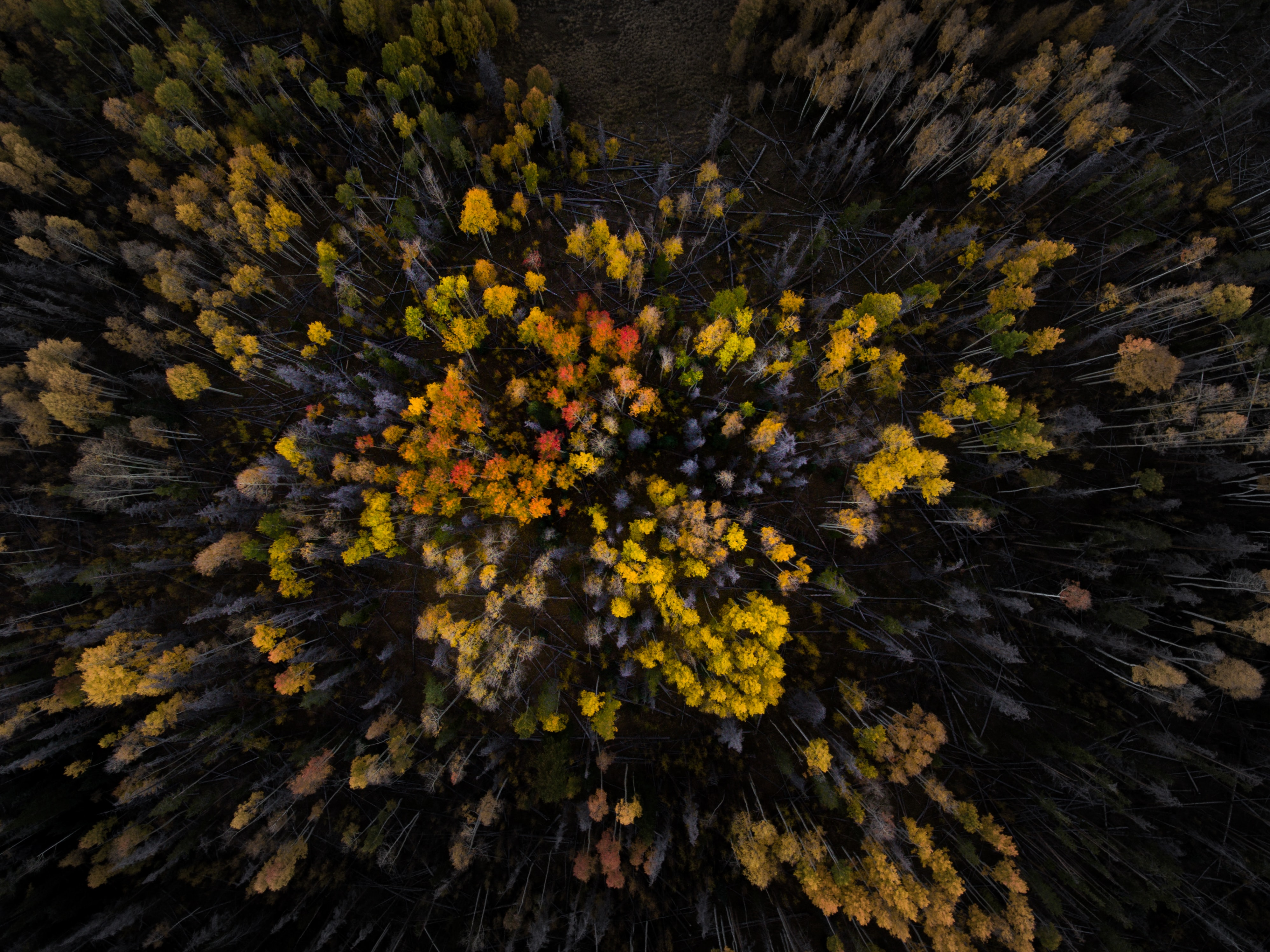 aerial photography of assorted-color flowers
