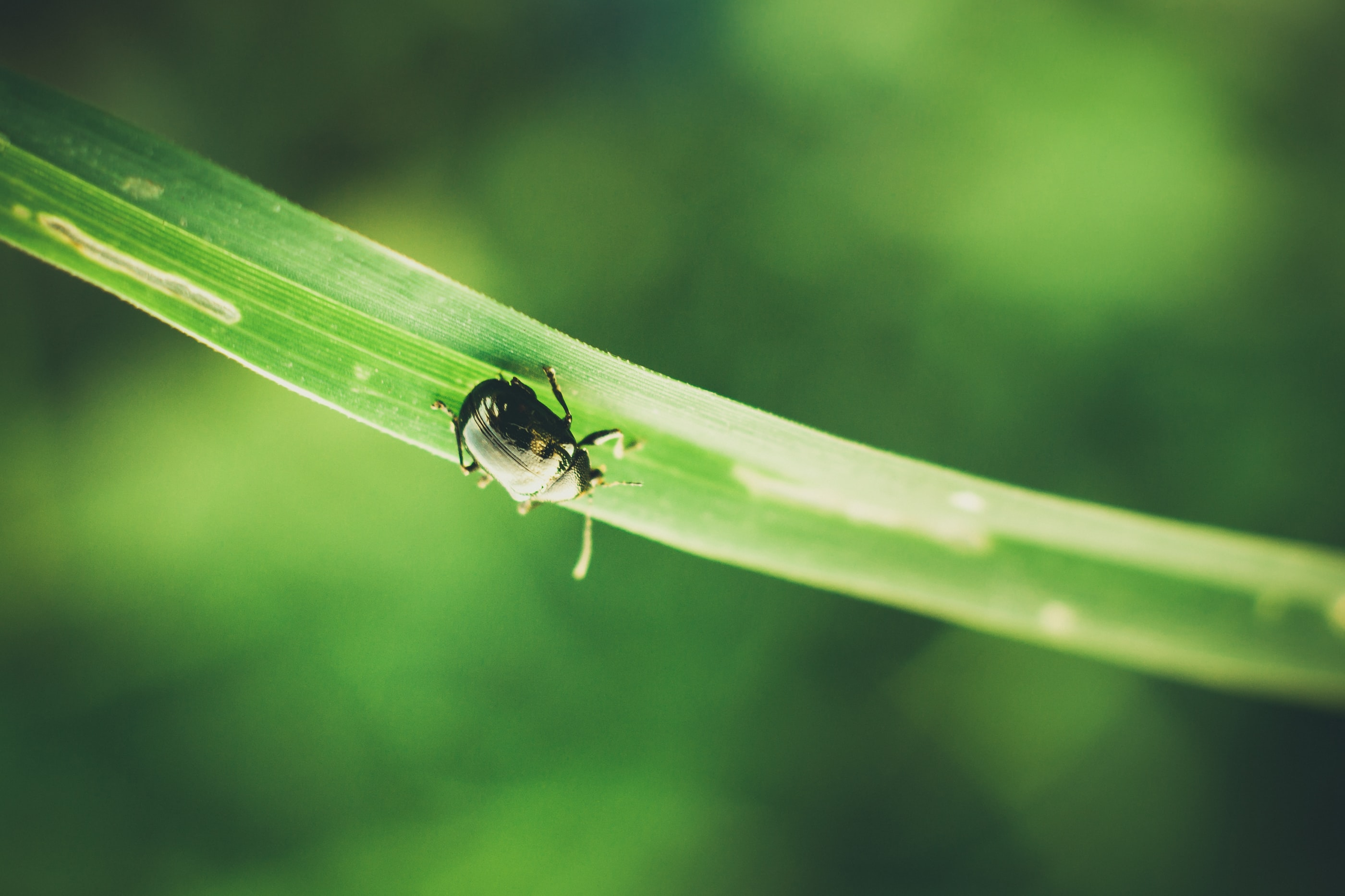 selective focus photography of green beetle on leaf
