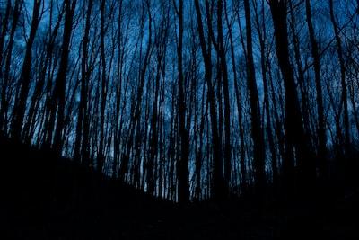 Dark branches at dusk