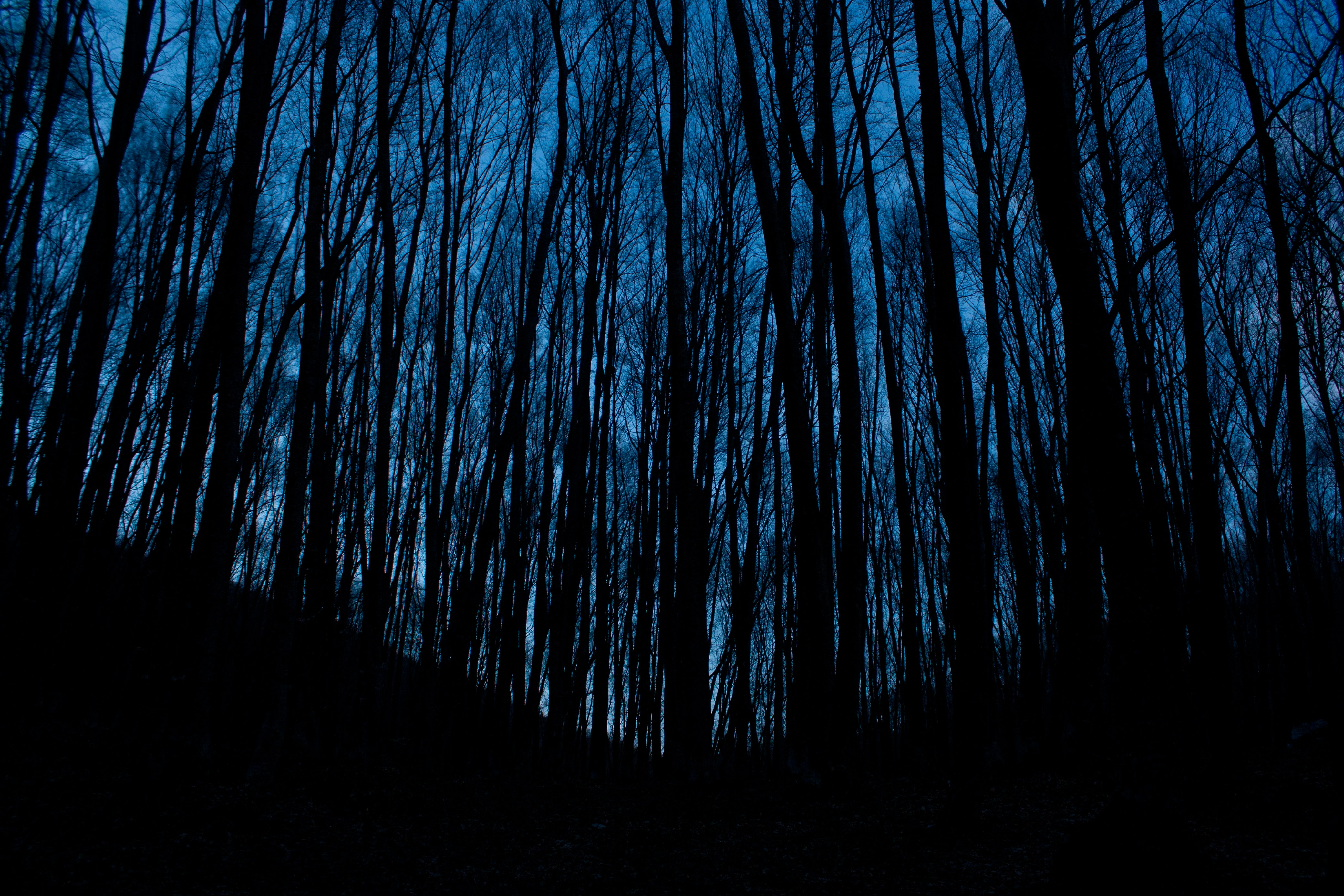 Tall desert trees in the dark forest at night in Hora Chatyrdah