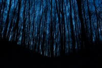 The Woods 10: Inspecting the Basement thewoods stories