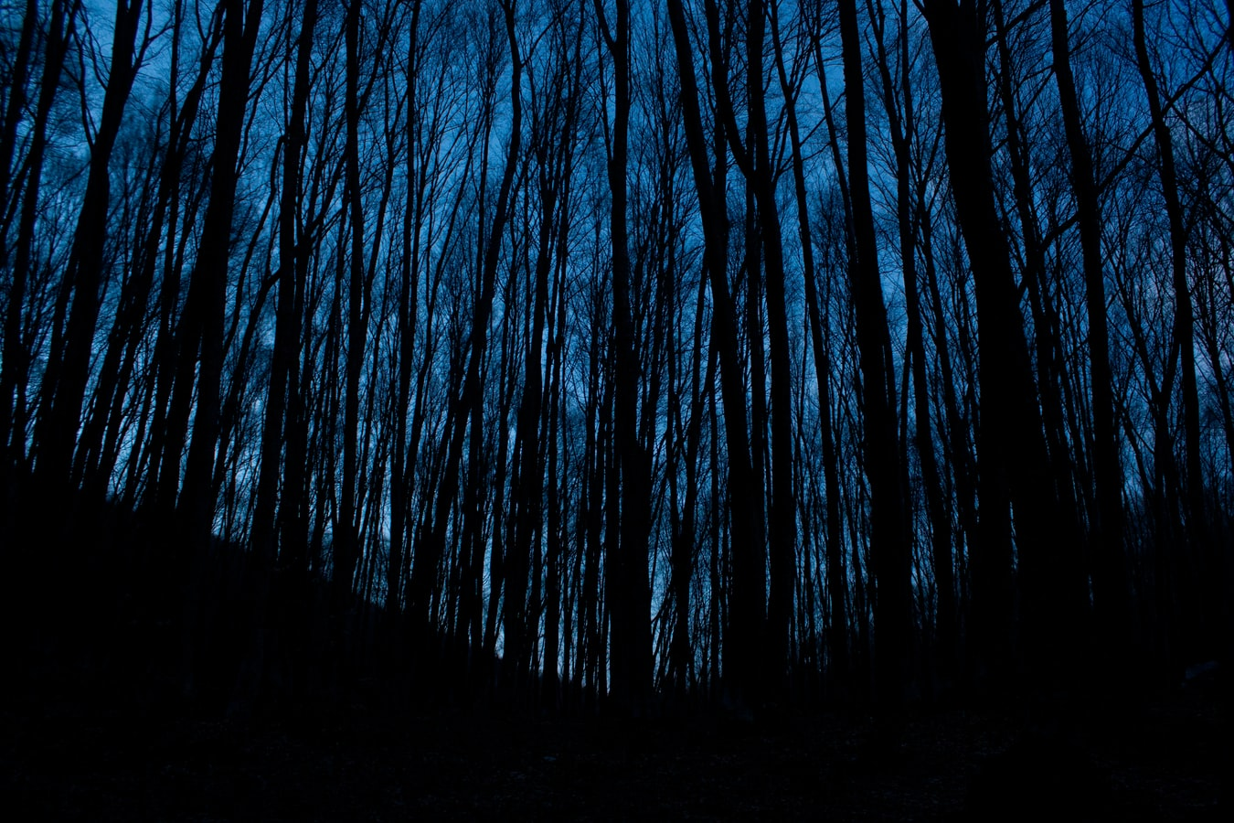 scary tall and thin black trees in blue background
