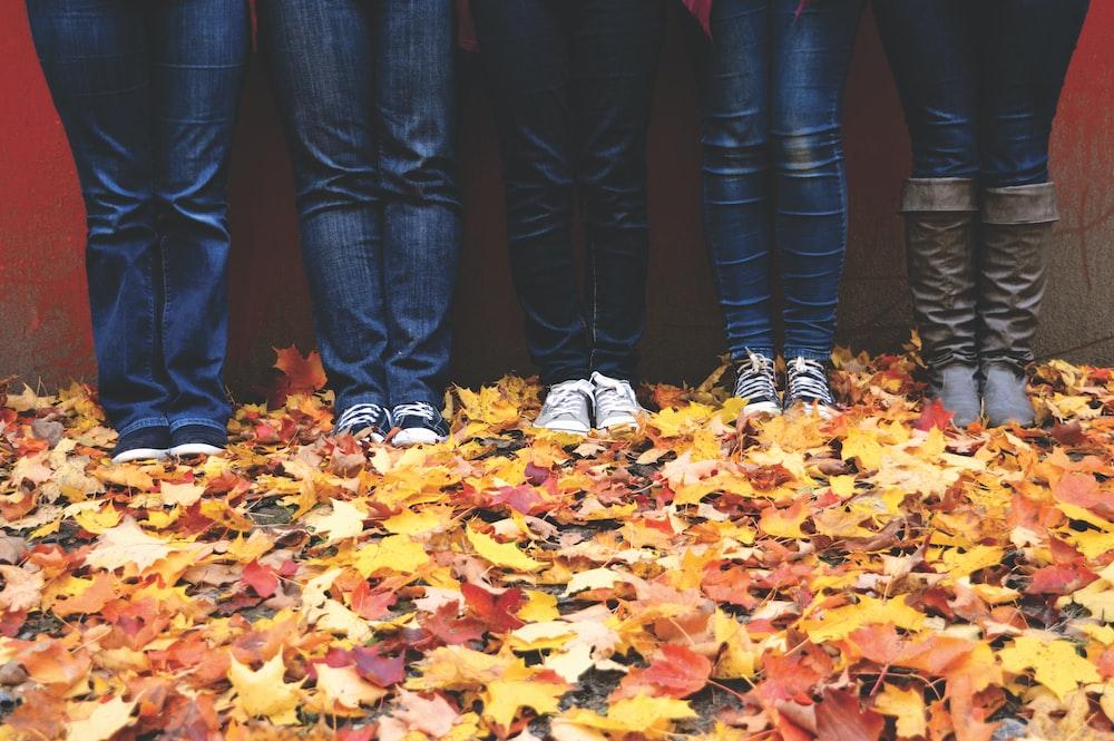five people wearing blue denim jeans standing near maple leaves