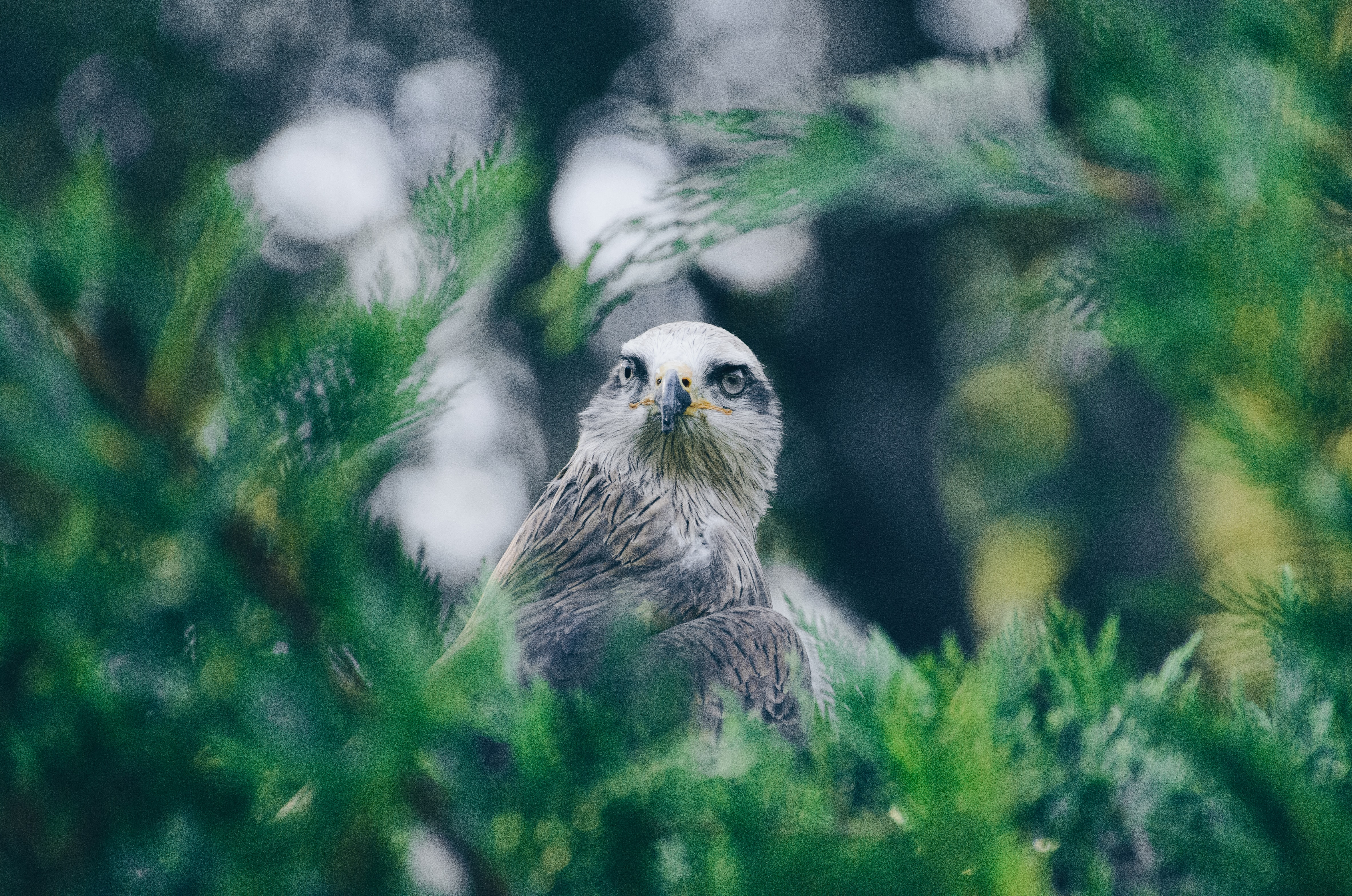 A shot of a sharp-beaked bird in the branches of a green tree