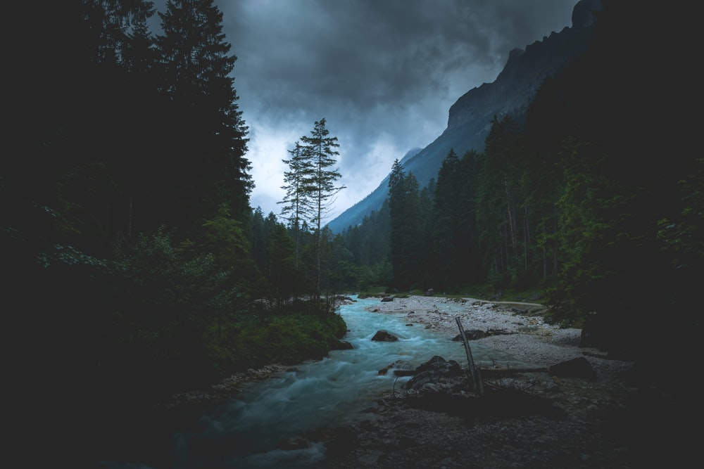 flowing river between tall trees
