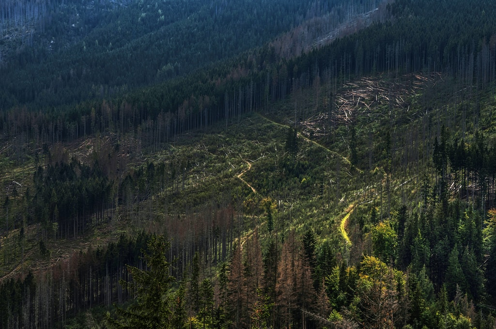 deforestazione amazzonia foreste secondarie
