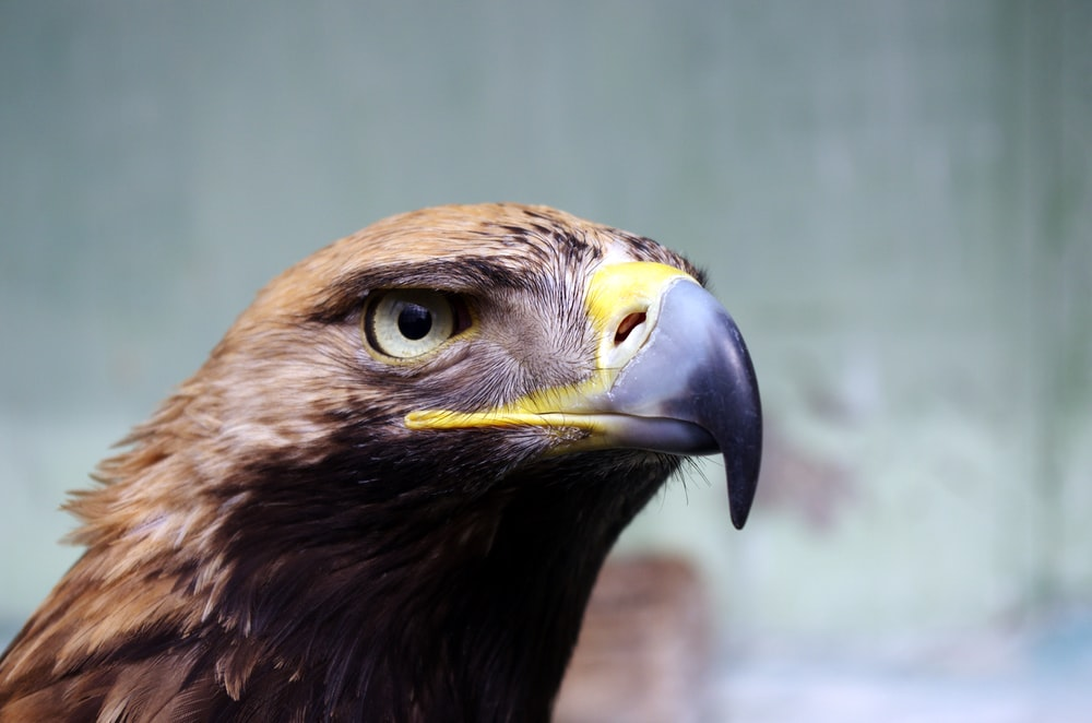 wildlife photography of bird