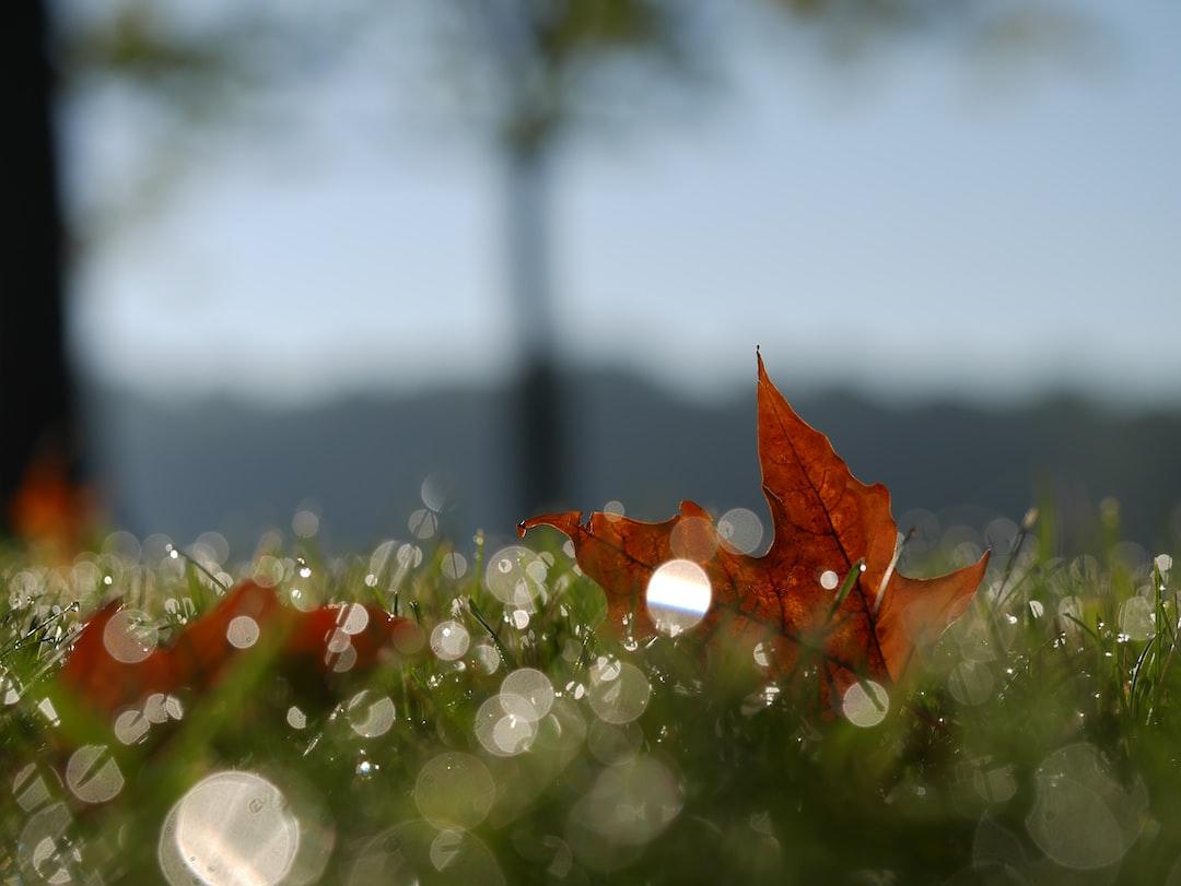 Autumn bokeh