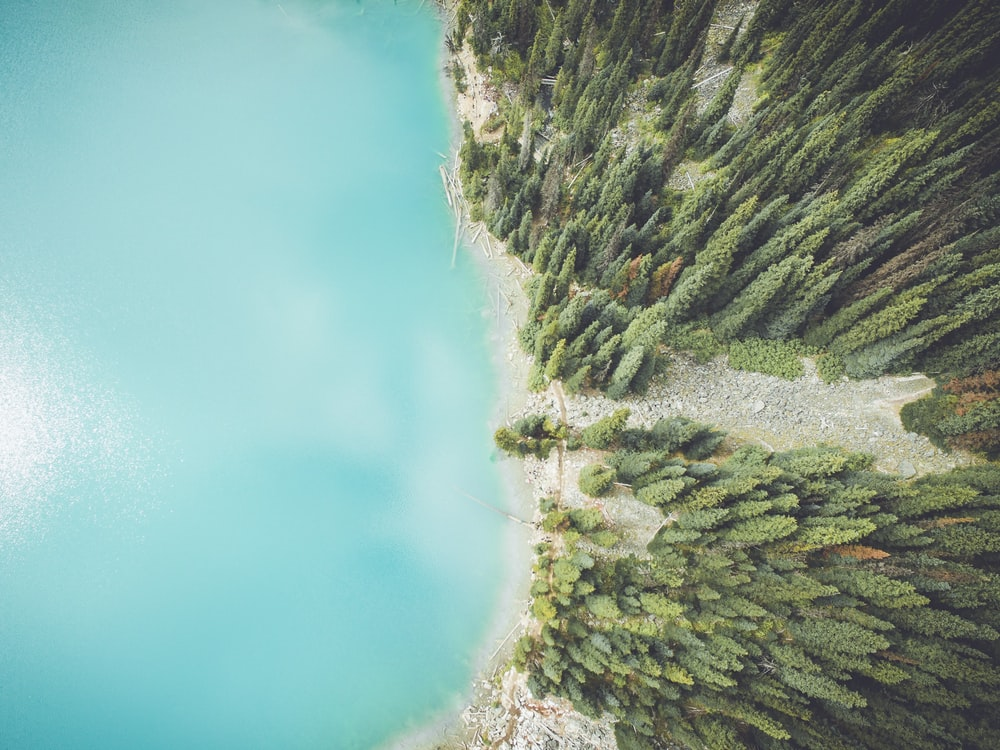 aerial photo of tall trees and ocean