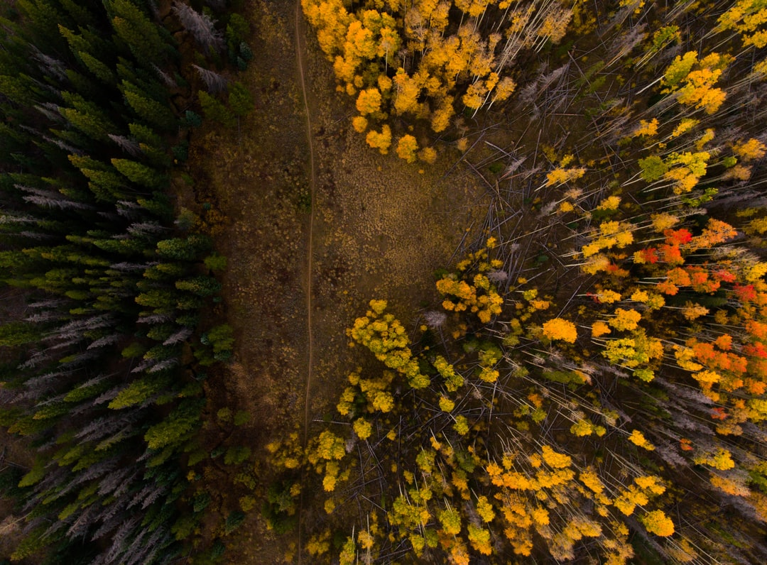Silverthorne forest from above