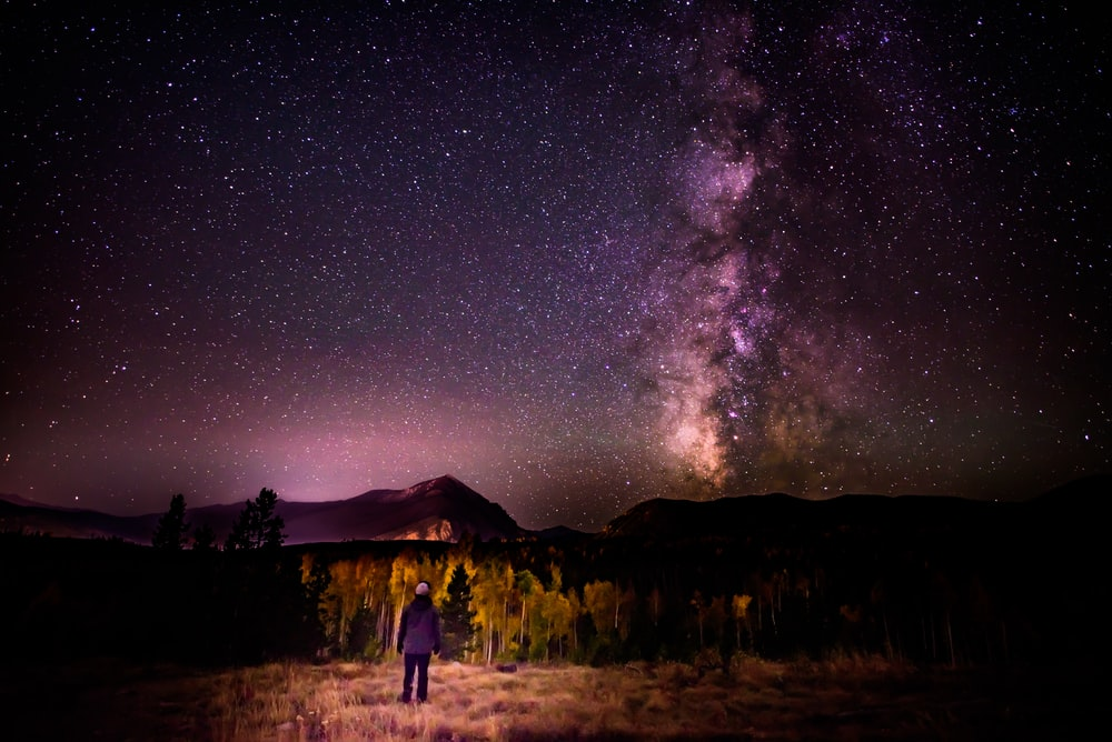 person standing near trees under starry sky