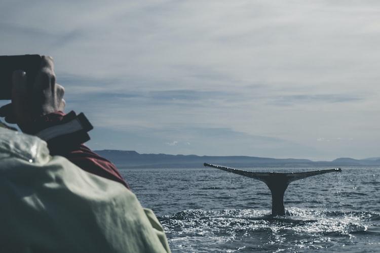 Salka Whale Watching, Things to do in Husavik
