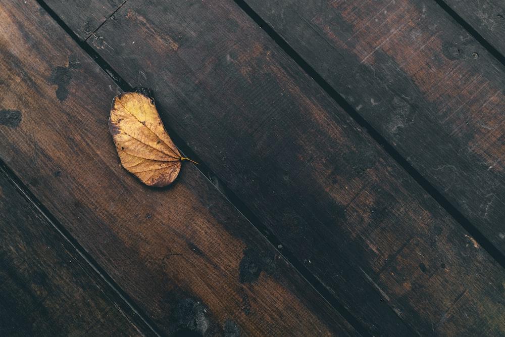 dried leaf on on plank