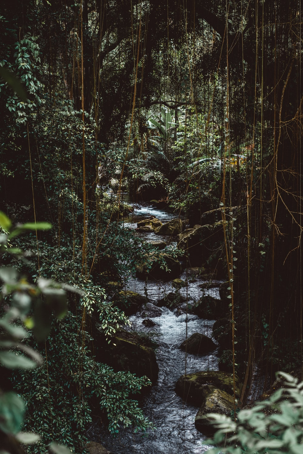 water flowing in forest