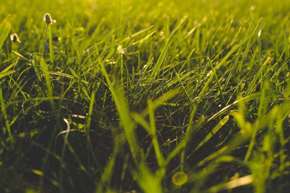 close up photography of grass field