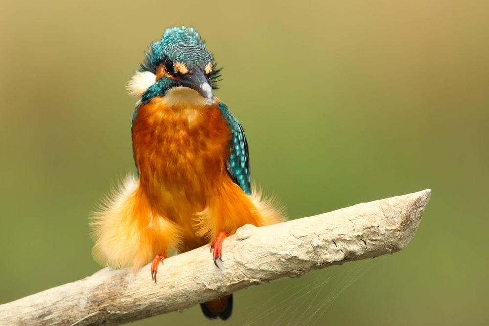 teal and brown bird perched on white stick