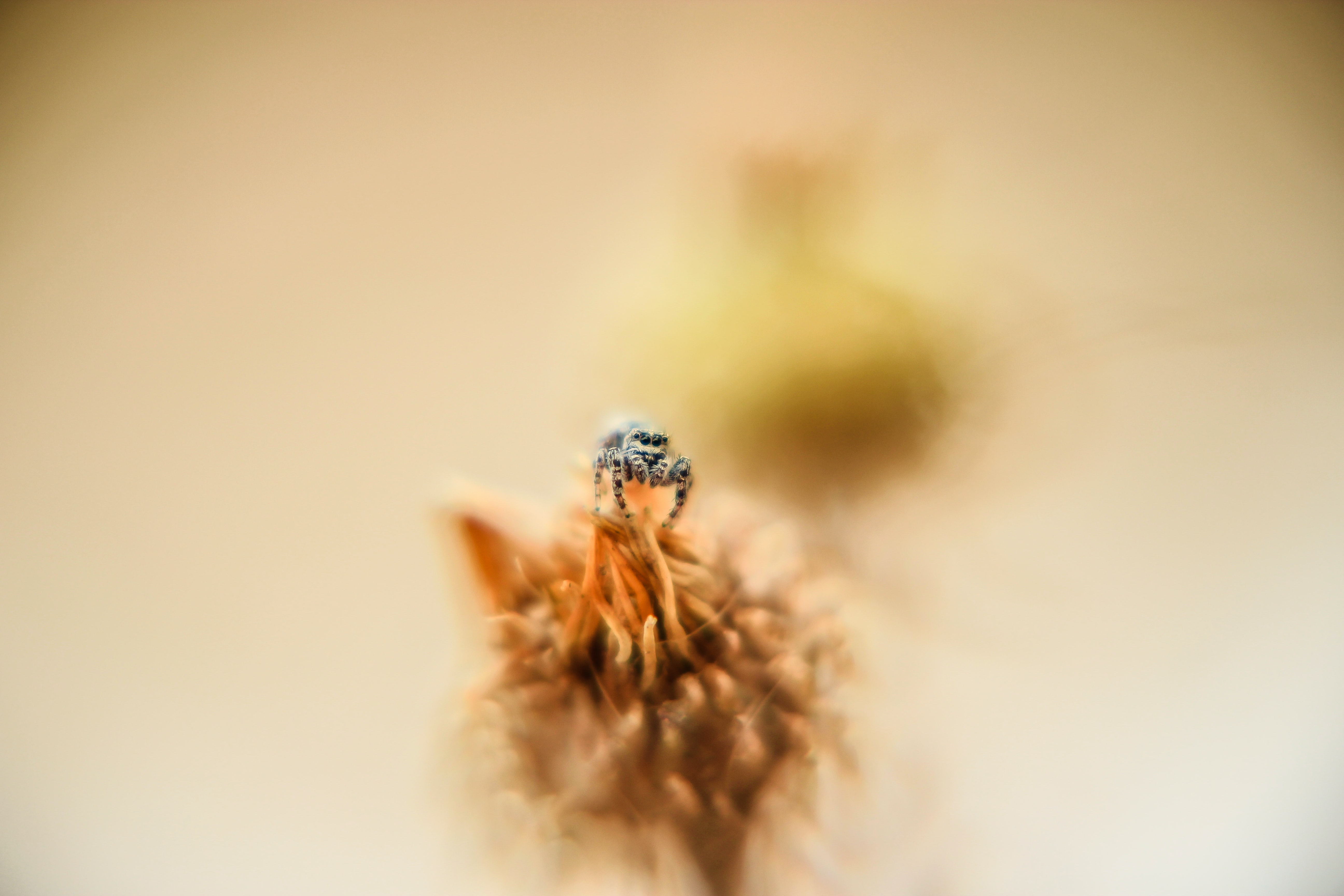 A macro shot of a spider on top of a flower
