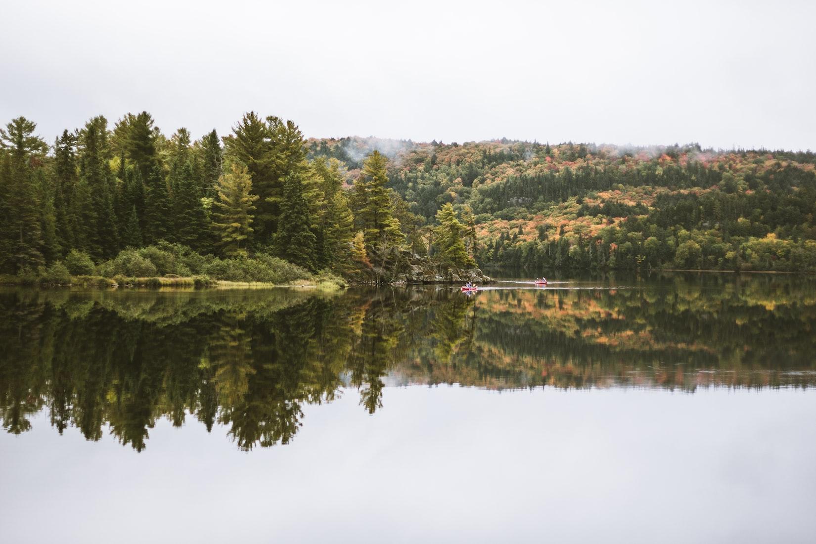 Algonquin Park Trail Camera Footage