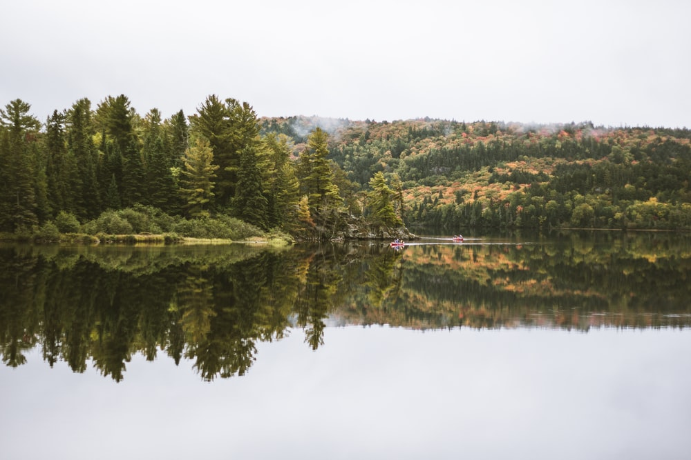 lake in forest under white sky nature photography