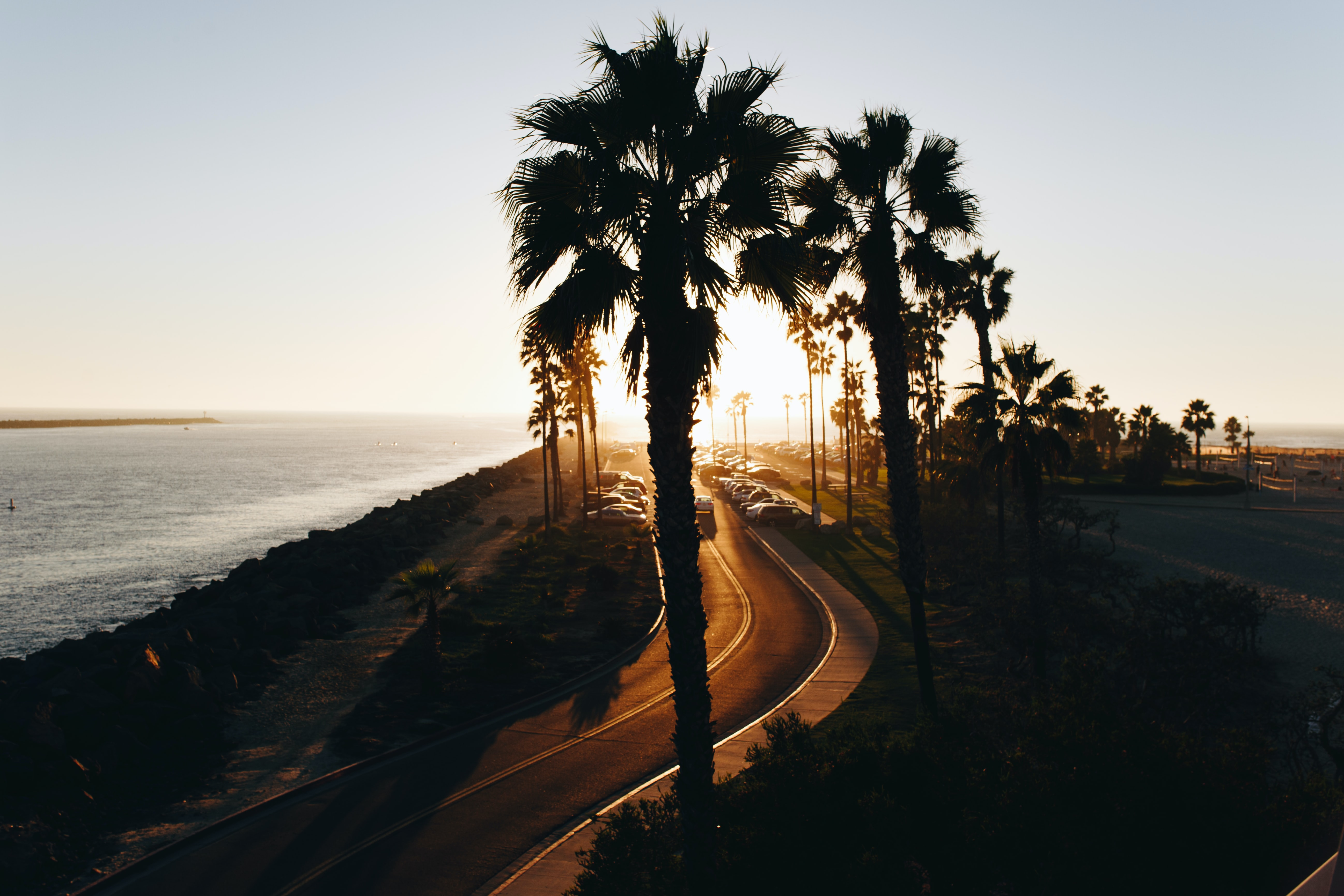 Palm tree boulevard road by the ocean during sunset at Mission Beach