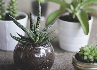green plants on pots