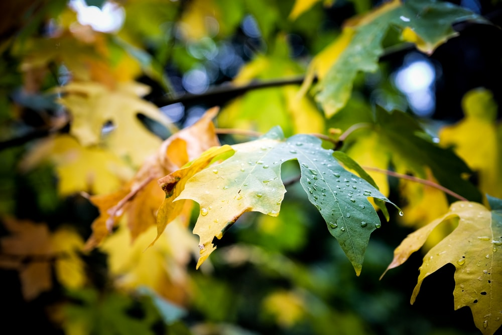 shallow photography of green leaf