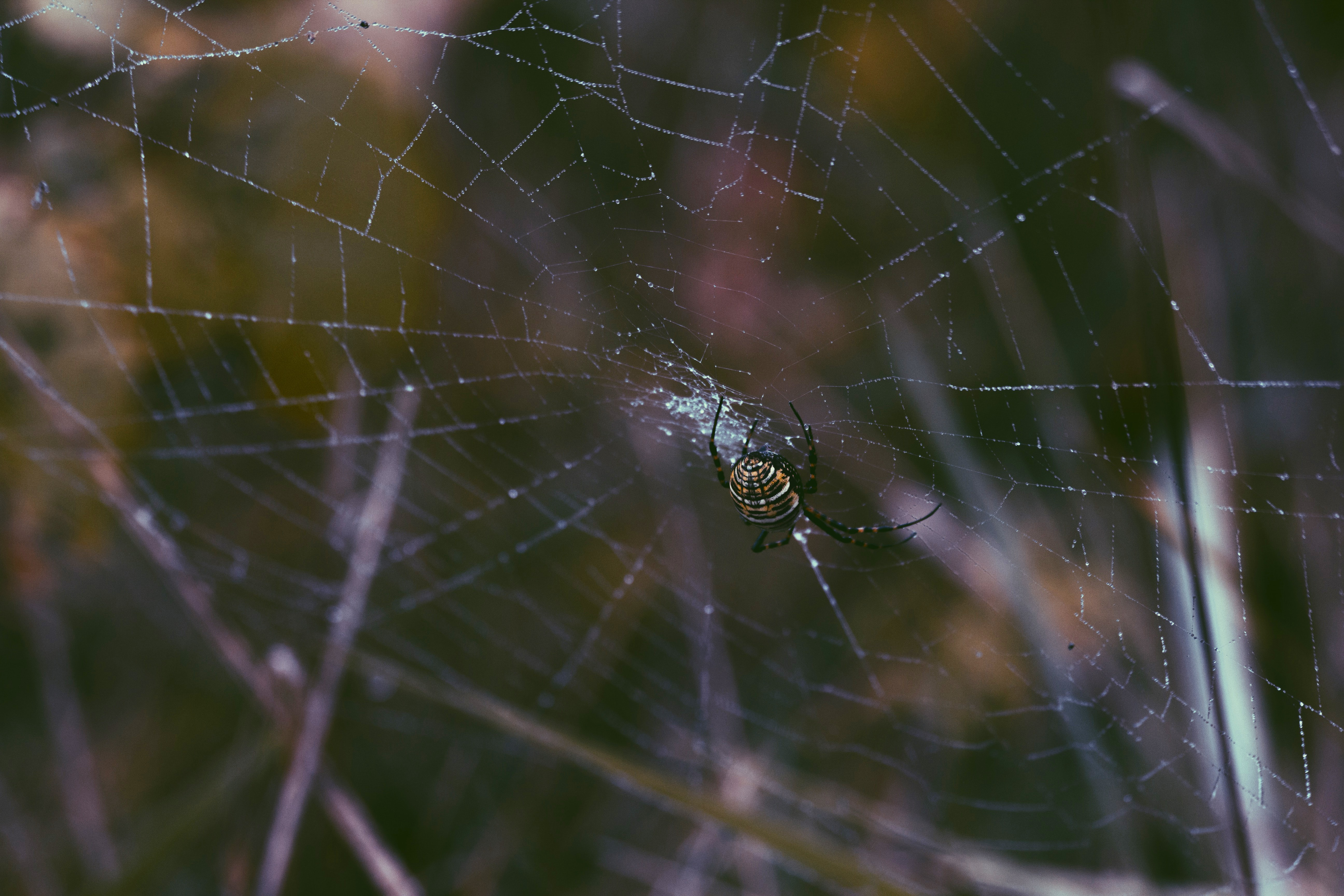 A spider in his web.