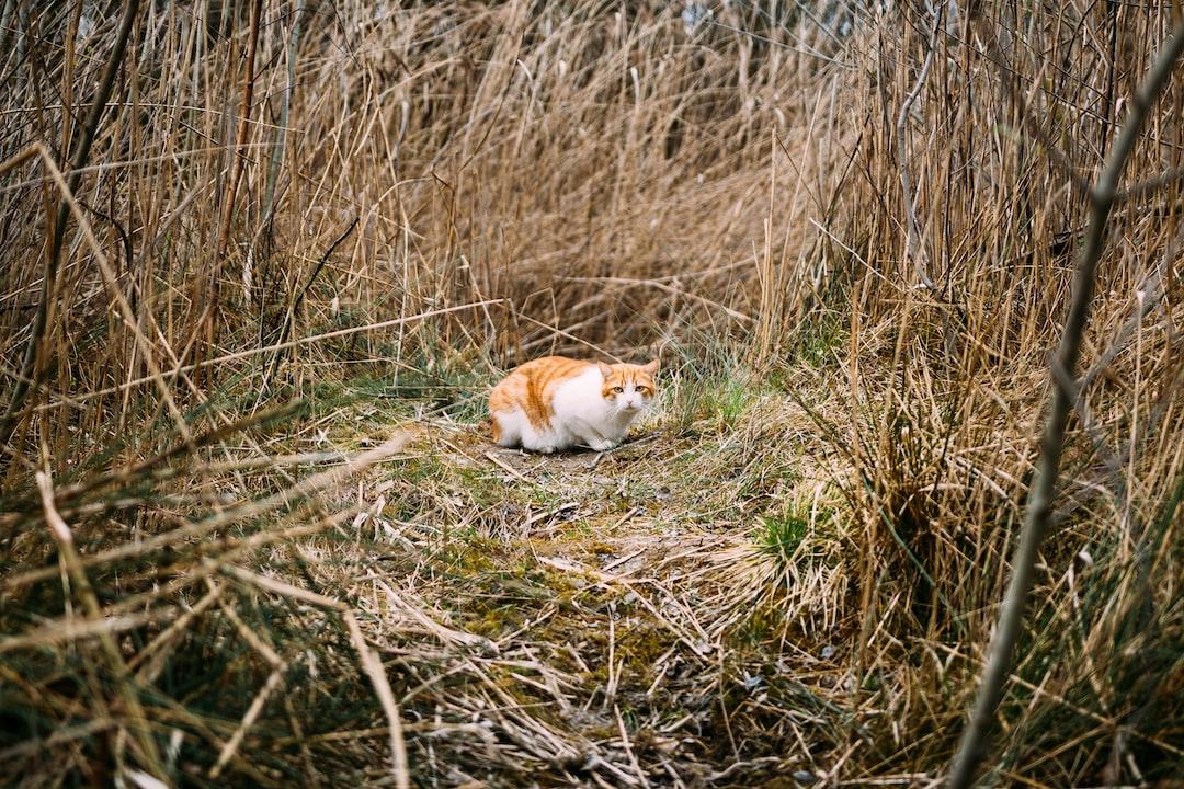 Feline explorer