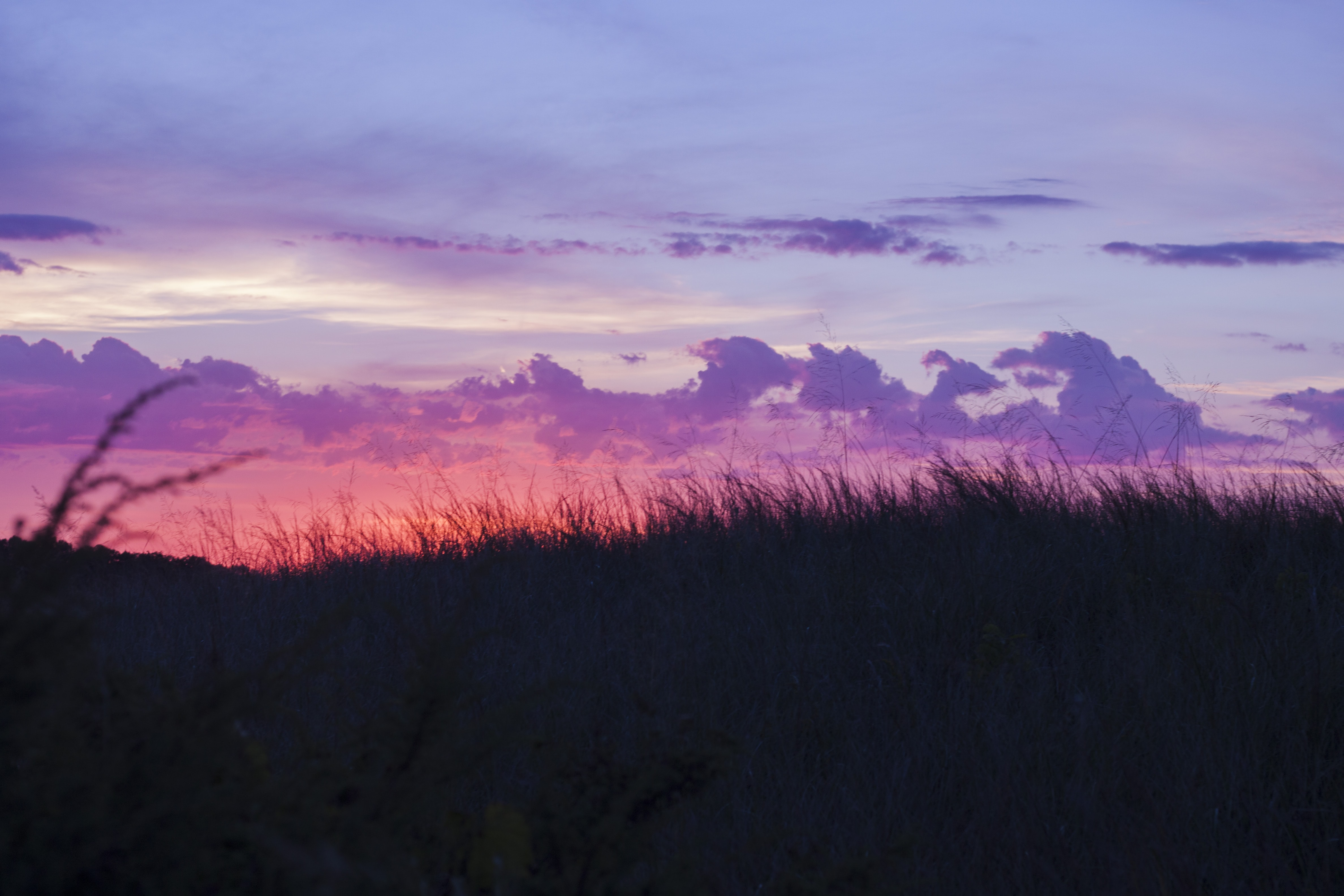 Purple clouds over grasslands in Indiana Dunes National Lakeshore