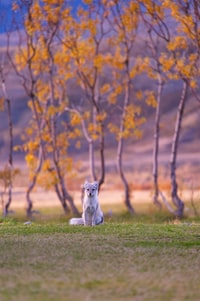 selective focus photography of white fox near brown leaf trees