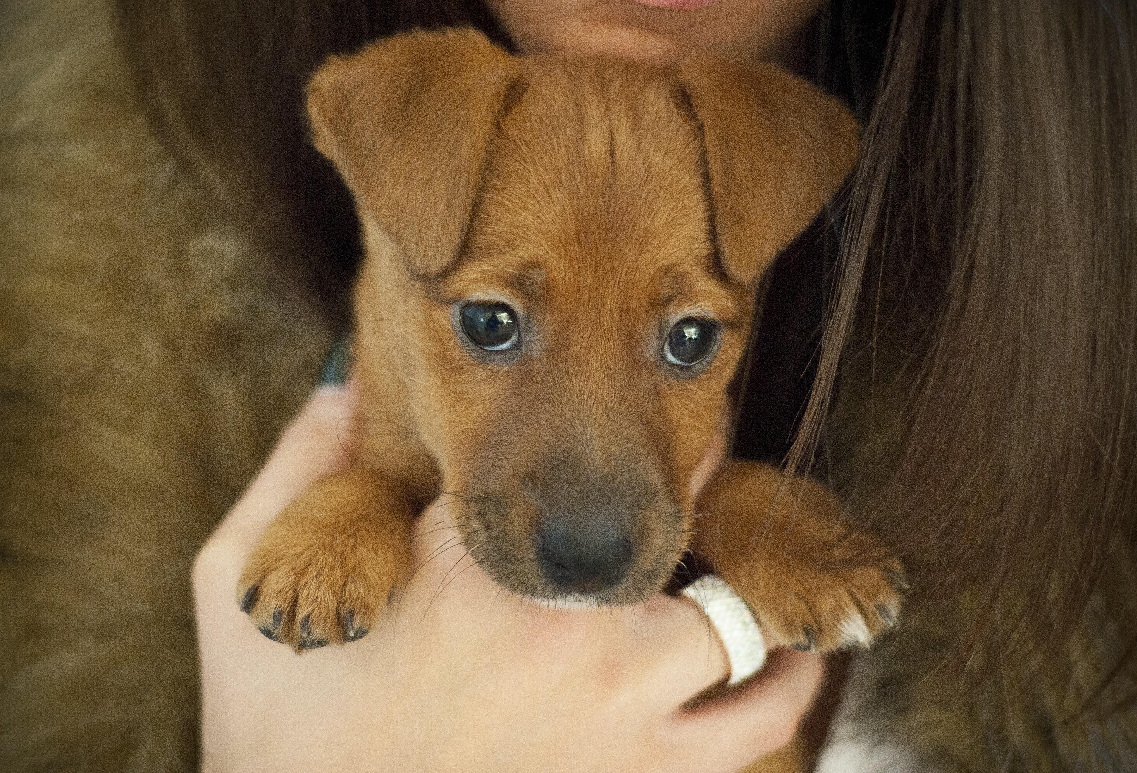 ginger for dog