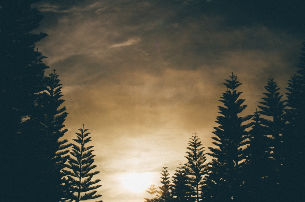 silhouette of trees under gray clouds