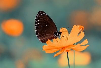 brown butterfly on orange petaled flower flower zoom background