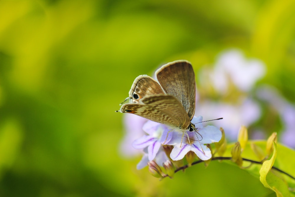 macro photography of beige butterfly on pollinating flower