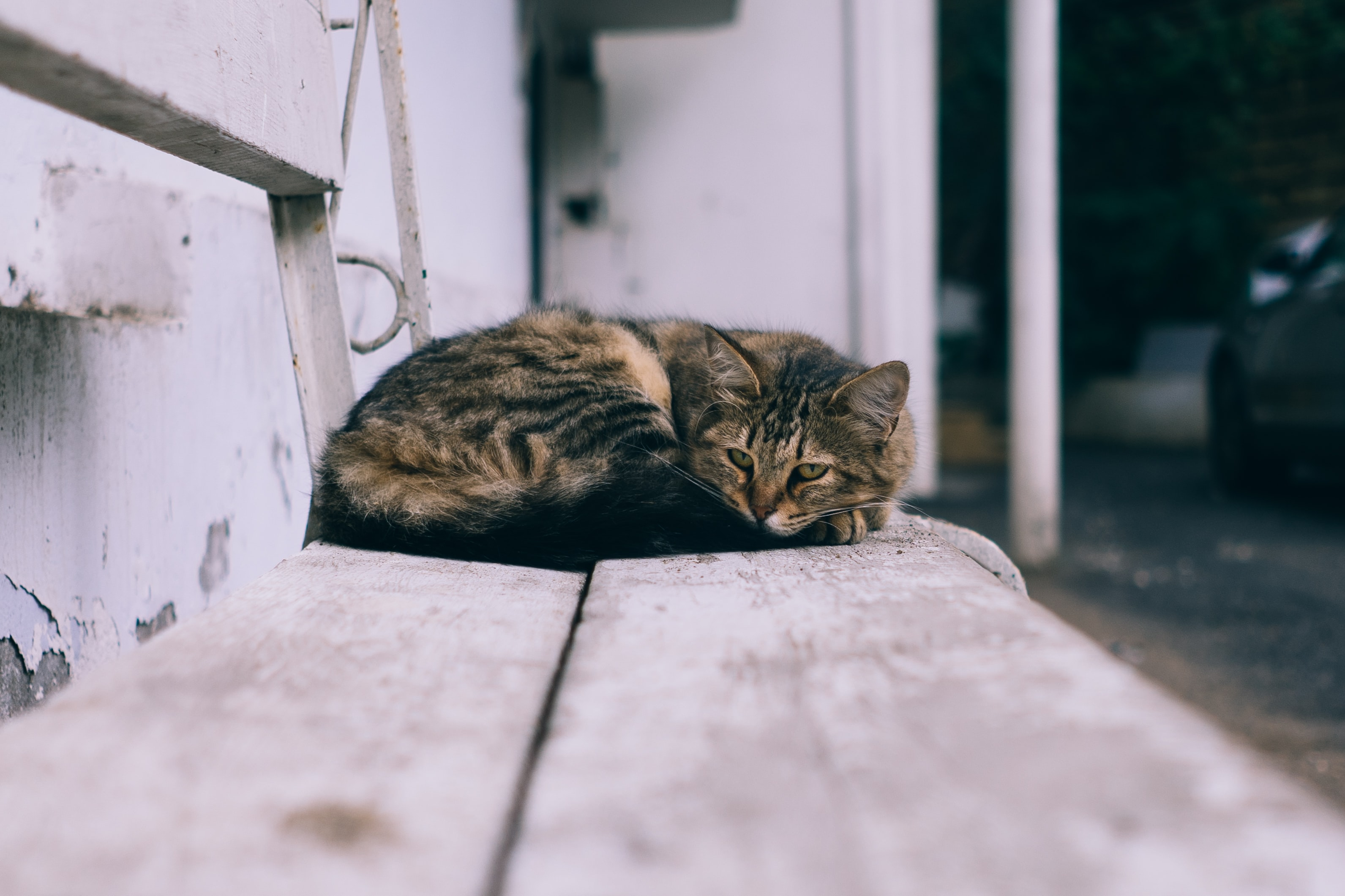 A furry tabby cat curled up on an old bench