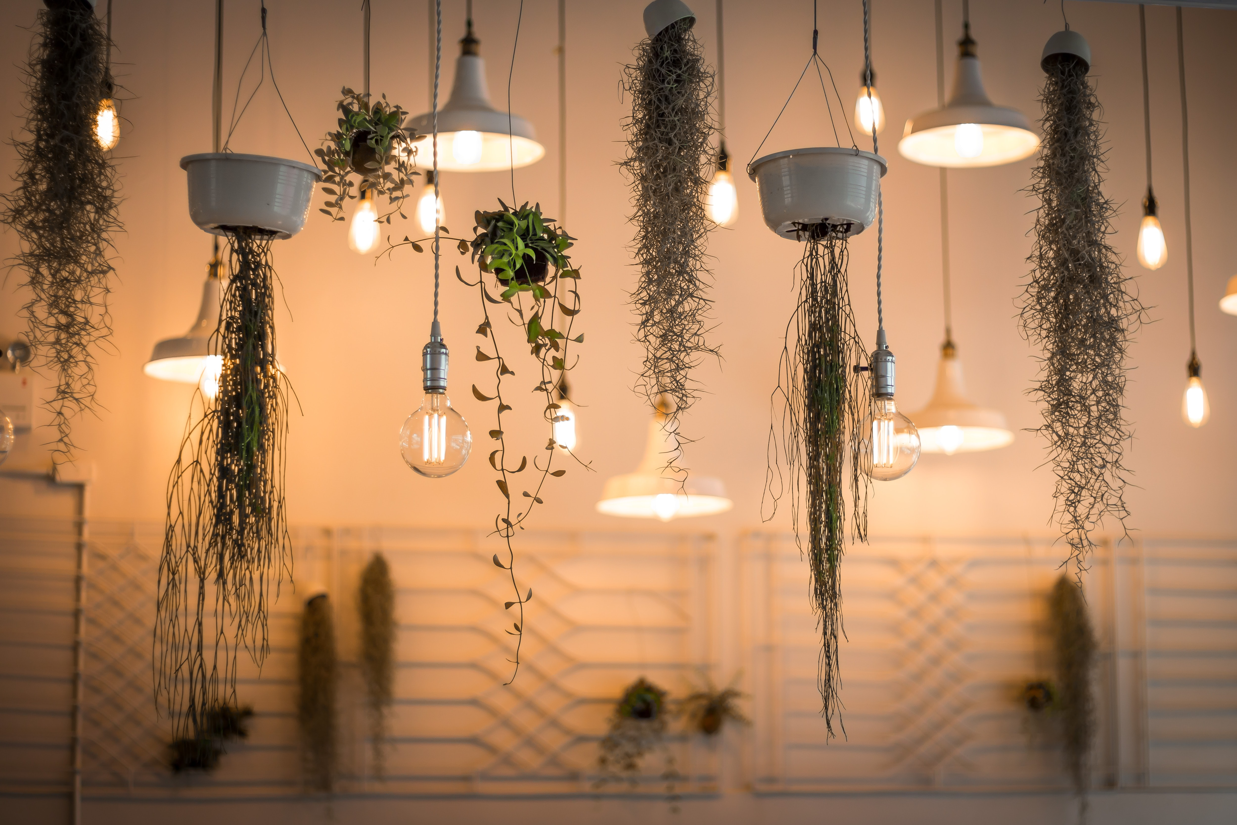 Vines and light bulbs suspended from a ceiling in a room in Bangkok