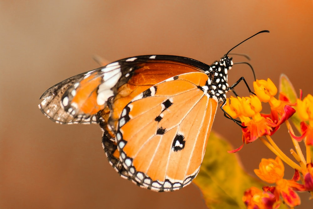 butterfly perching on orange flower