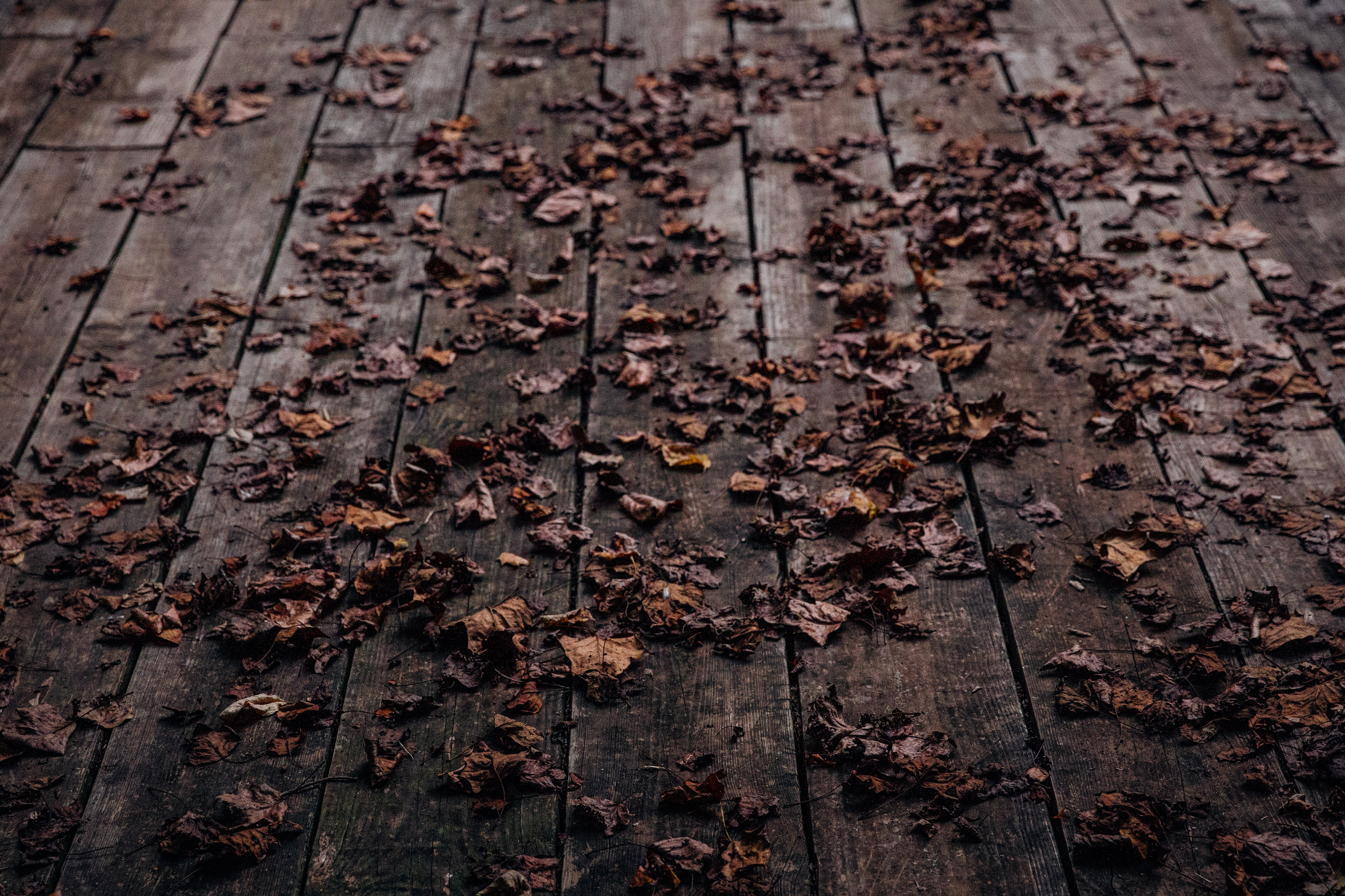 A wooden deck covered in curled-up autumn leaves