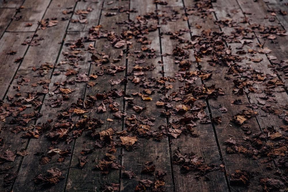 brown leaves on wooden floor