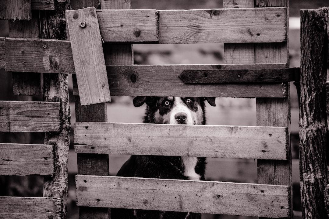 sheep dog and fence Lipoglav