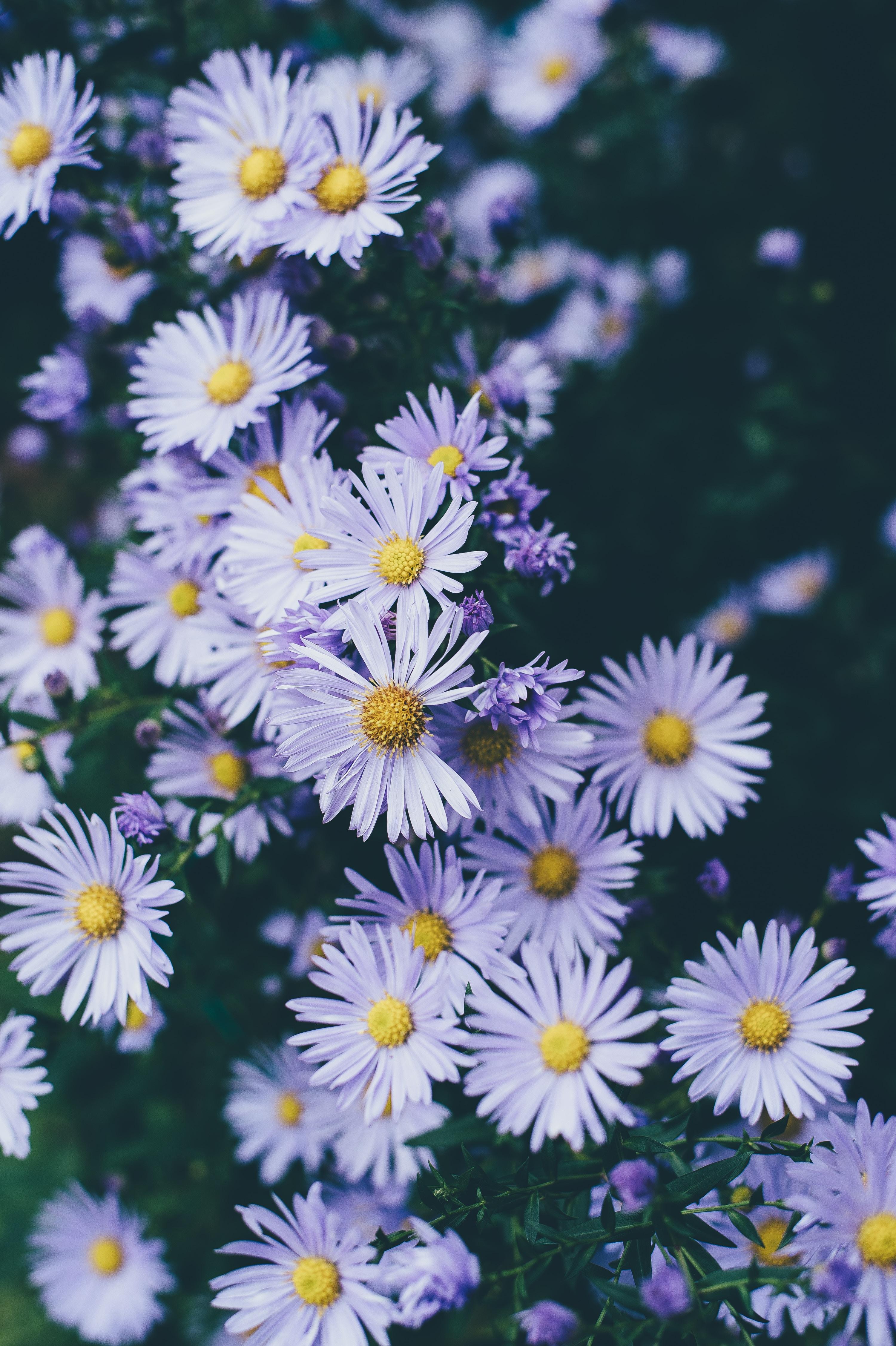 white petaled flowers closeup photography