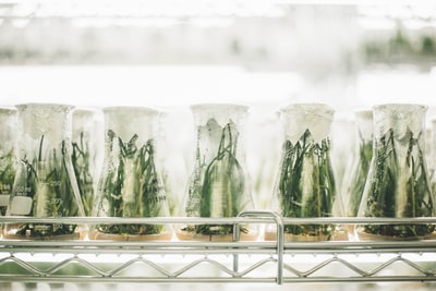 Plants in beakers
