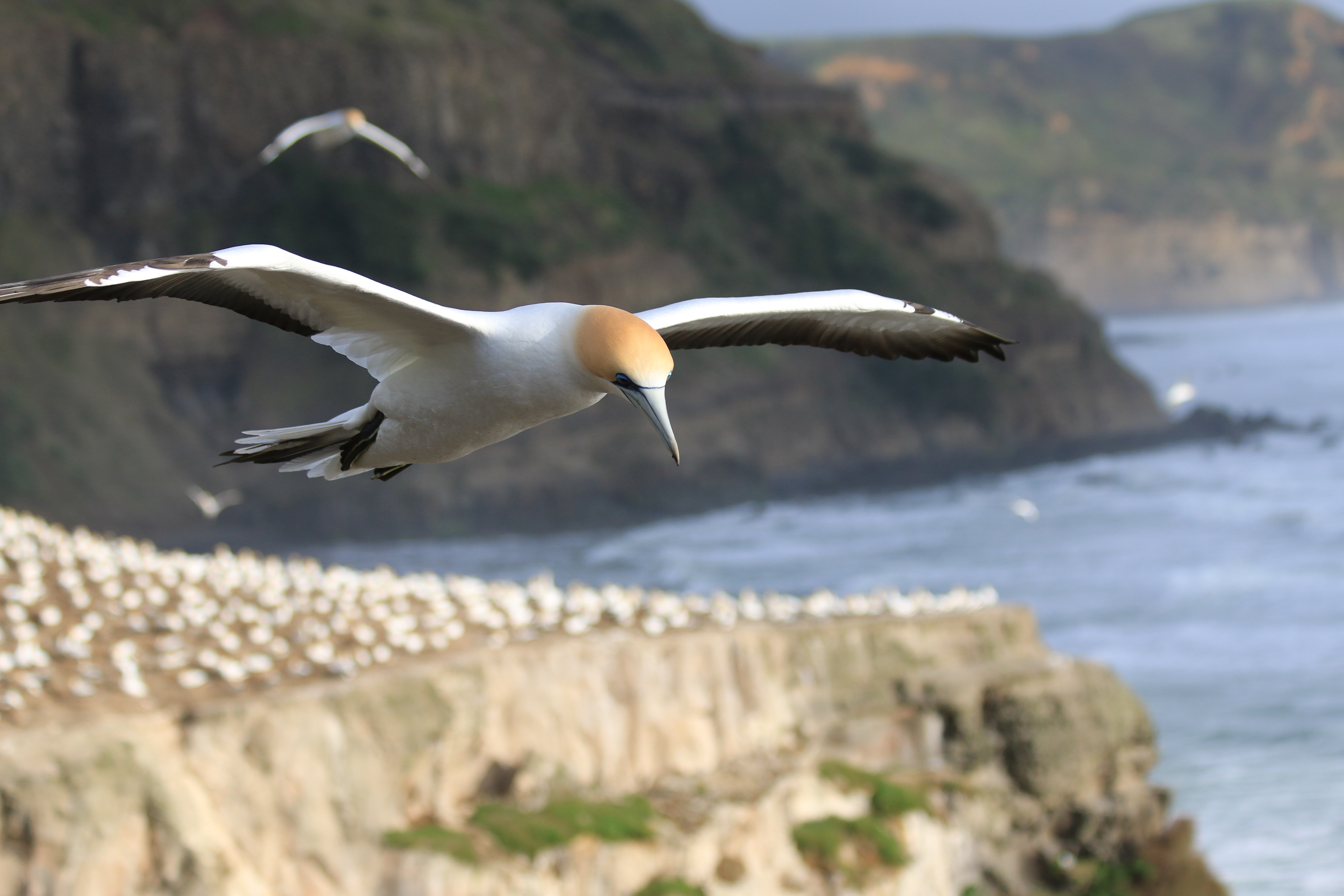 selective focus photography of seagull