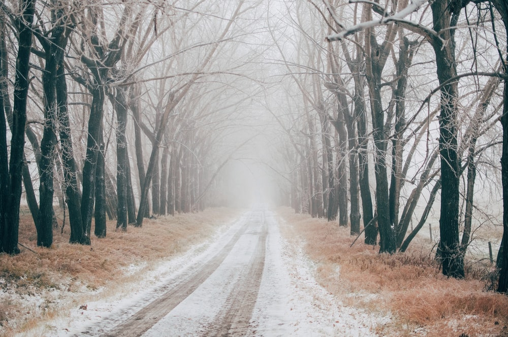 road between bare trees during daytime