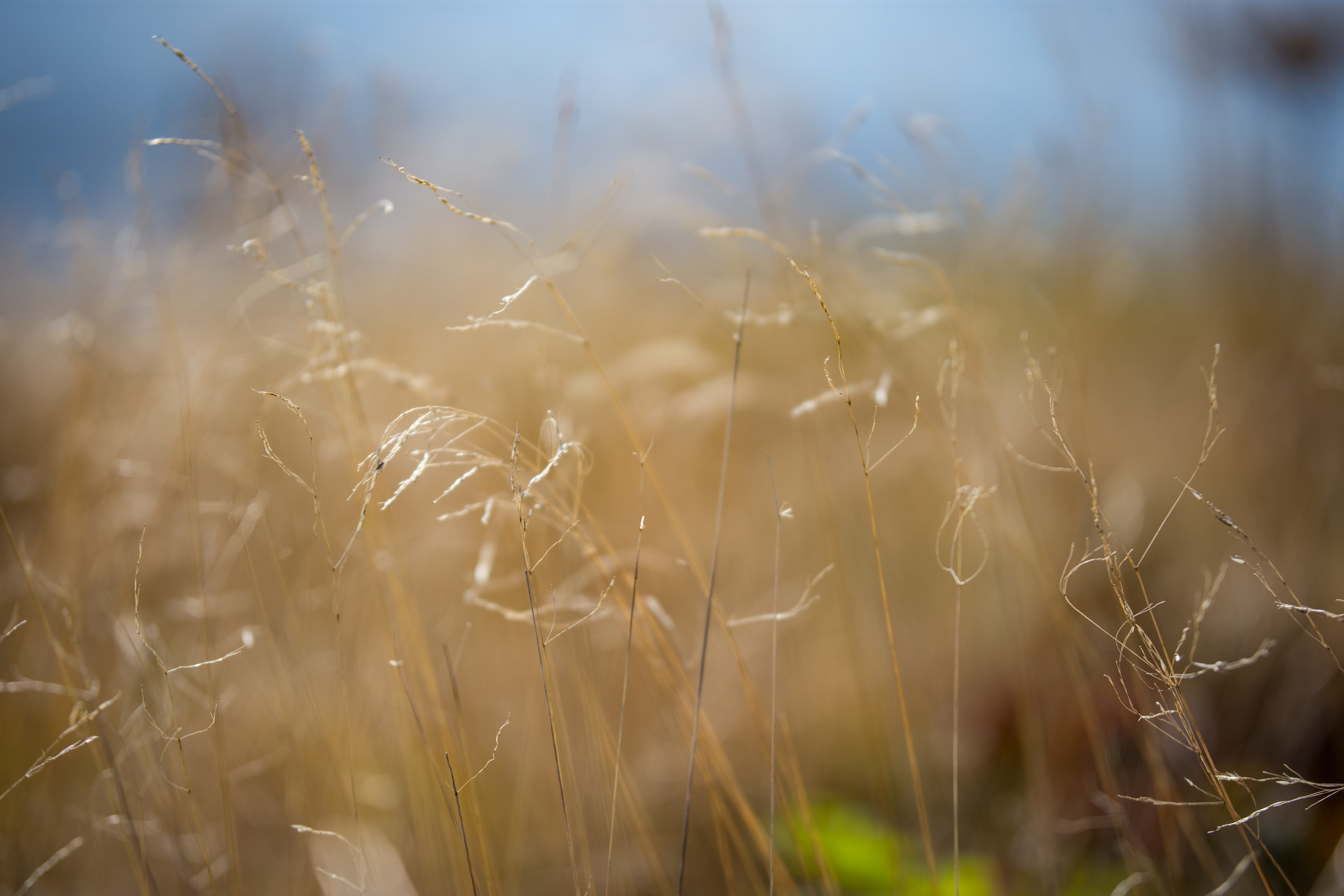 Macro of dry grass in a field