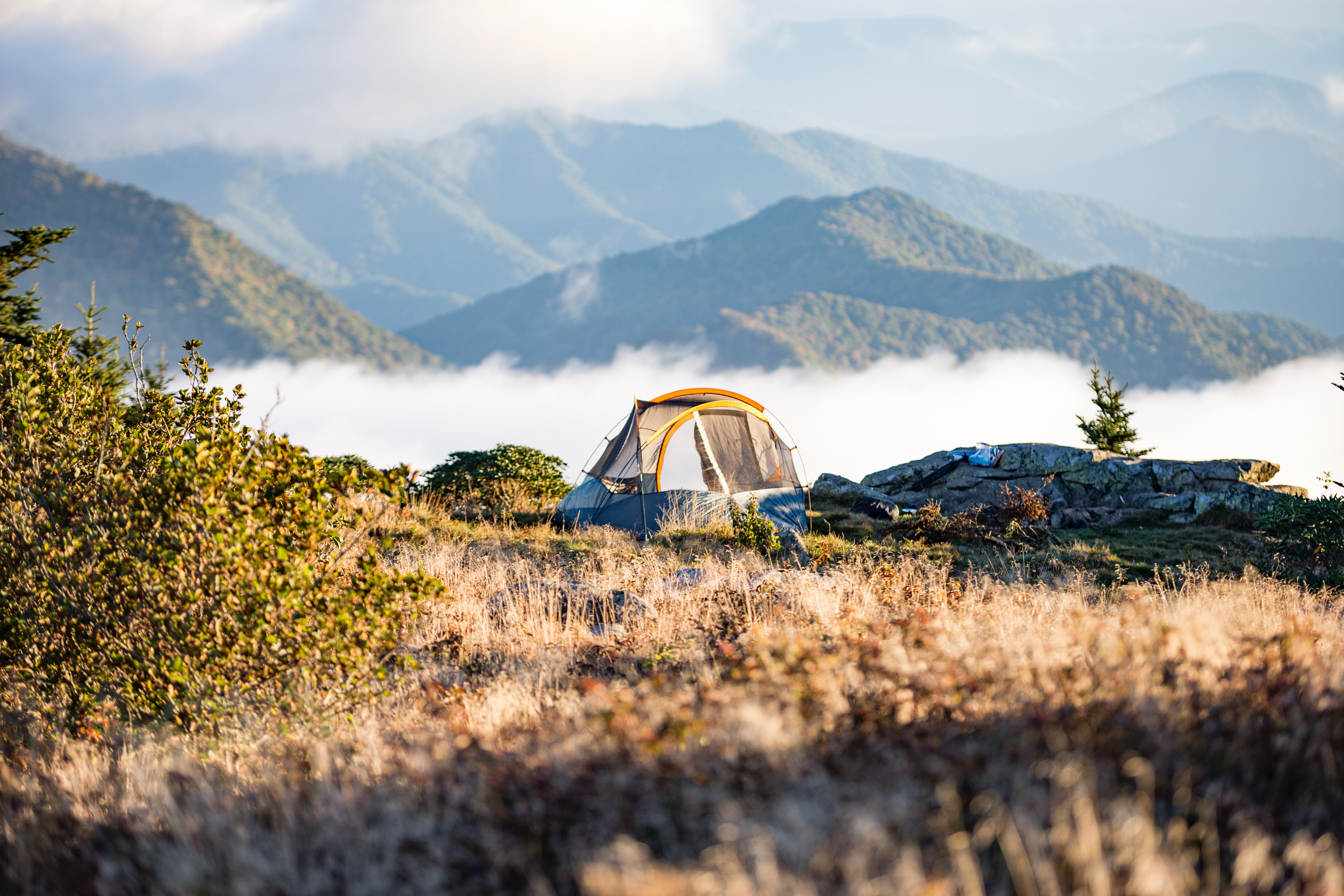 A small tent near thorny bushes on the side of a mountain
