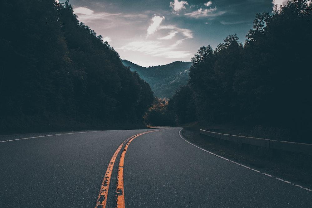 gray concrete road between trees