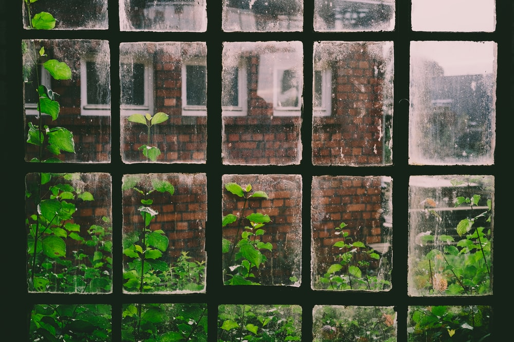 window view of green leafed plants across building